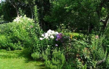 Blumen & Ambiente